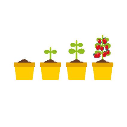 3 groei